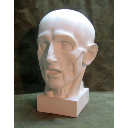 Голова анатомическая (ск.Гудон)